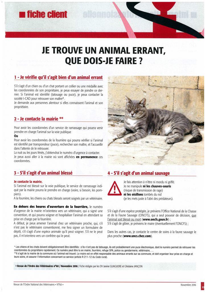 animal-errant